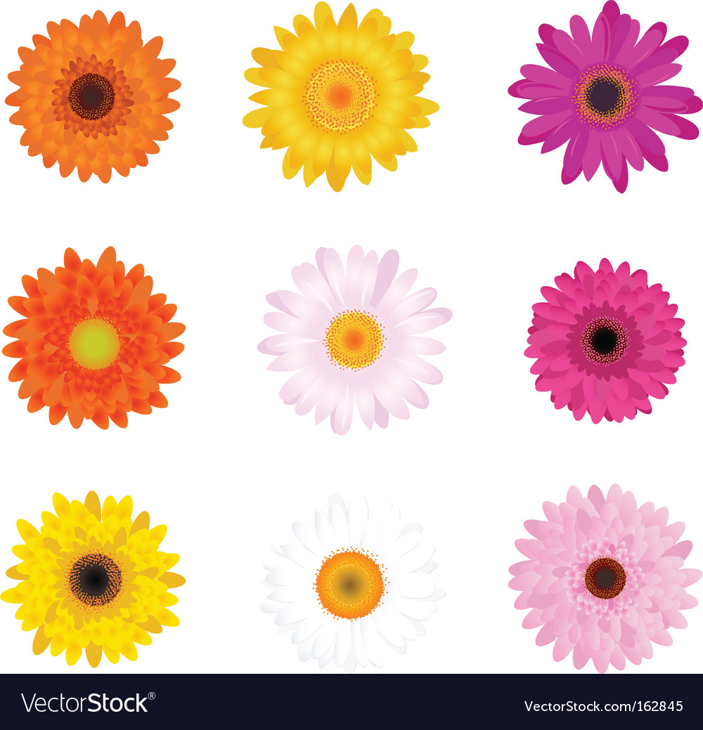 Colourful daisies vector