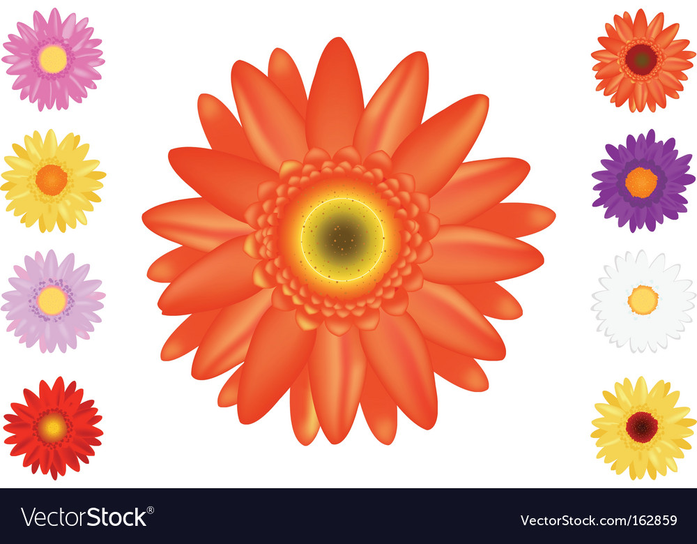 Colourful gerbers set vector