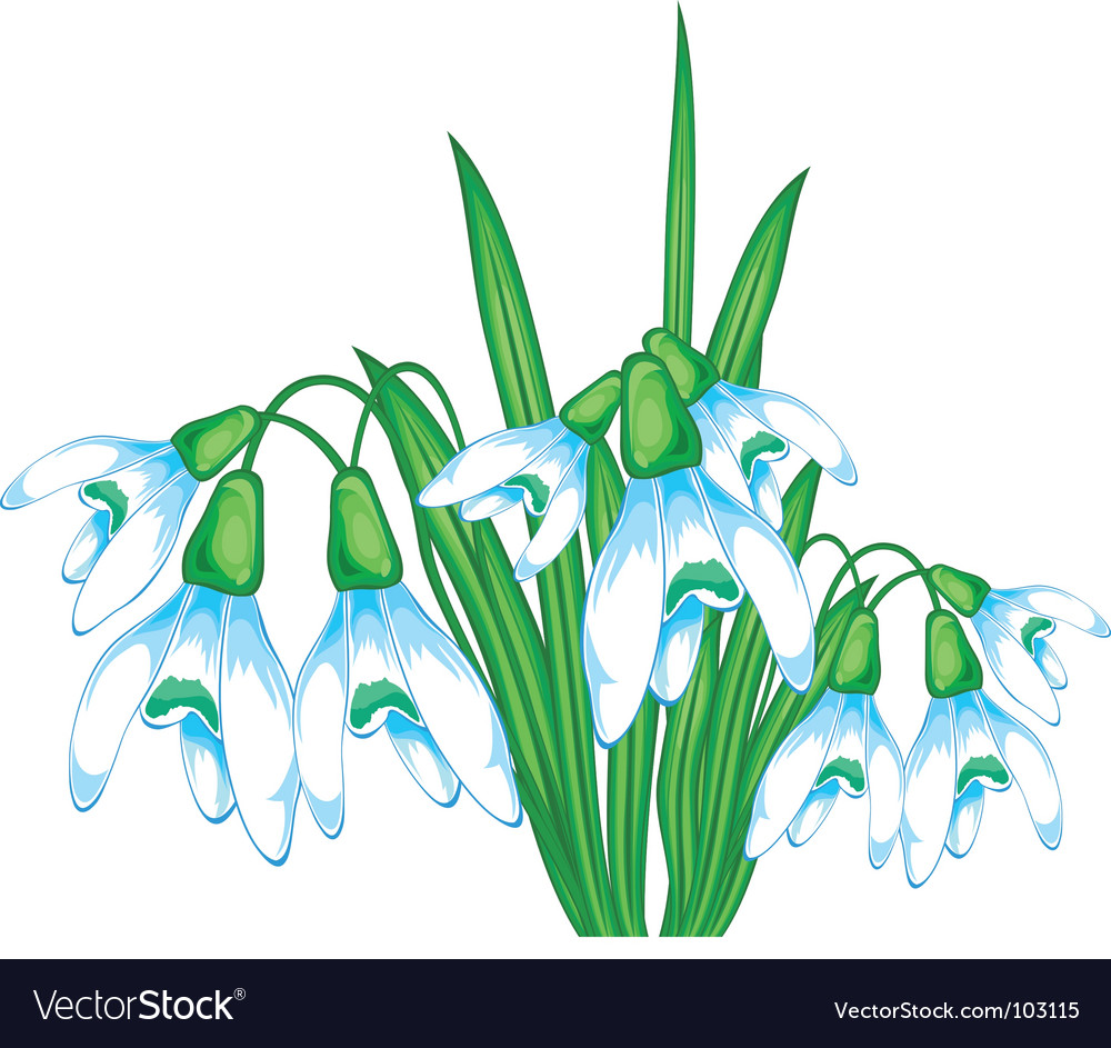 Snow flowers vector