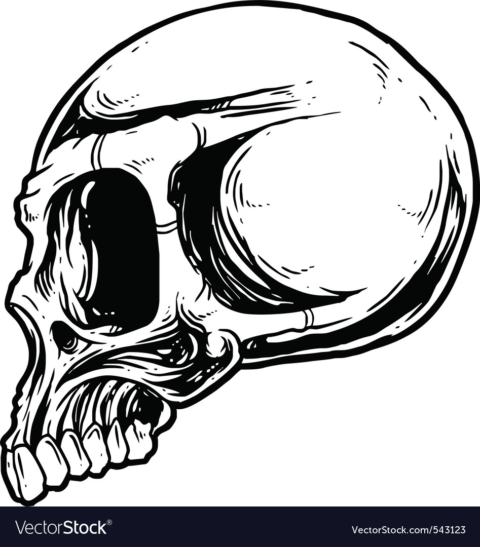 Skull sketch design element vector