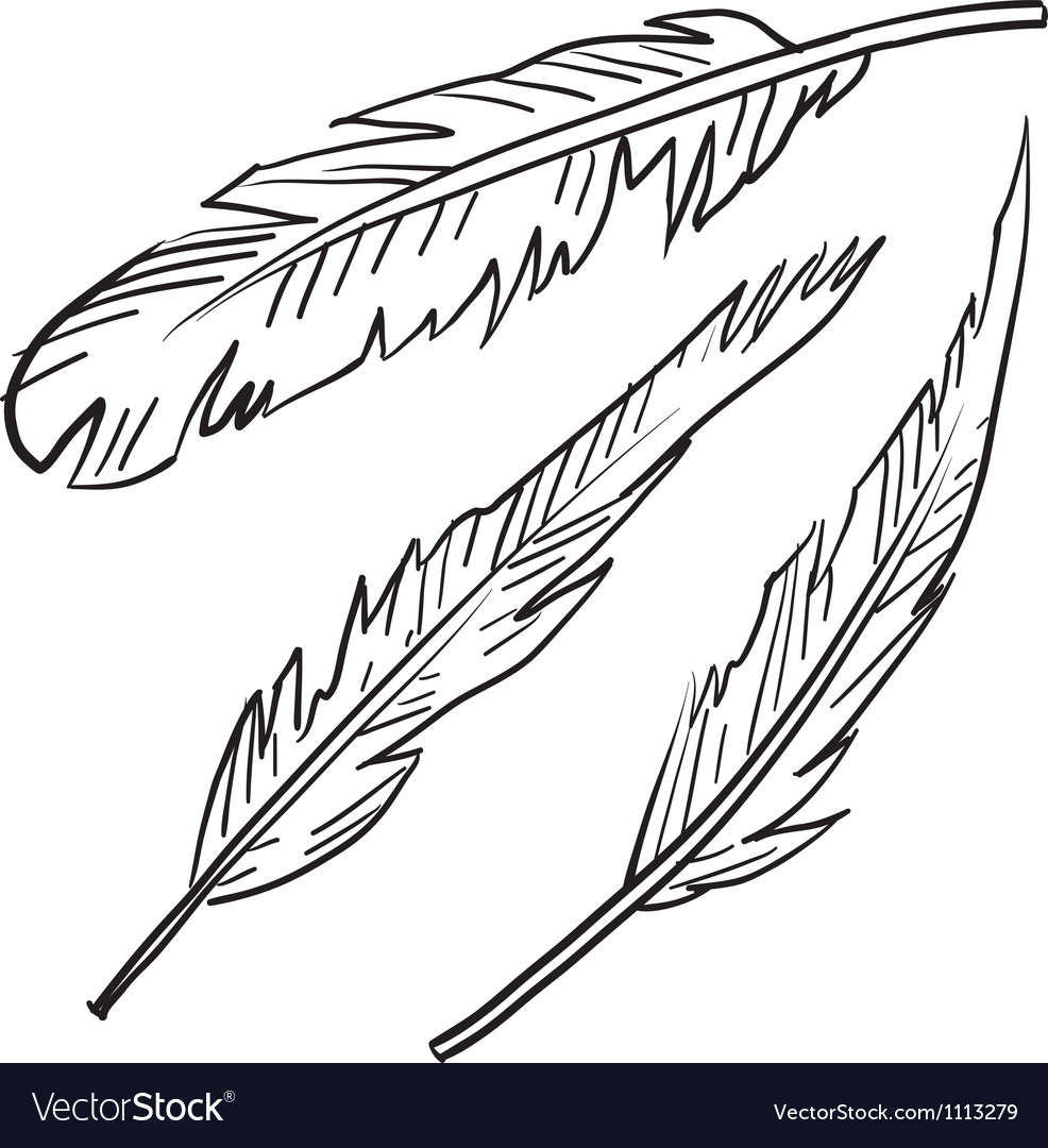 Doodle feathers vector