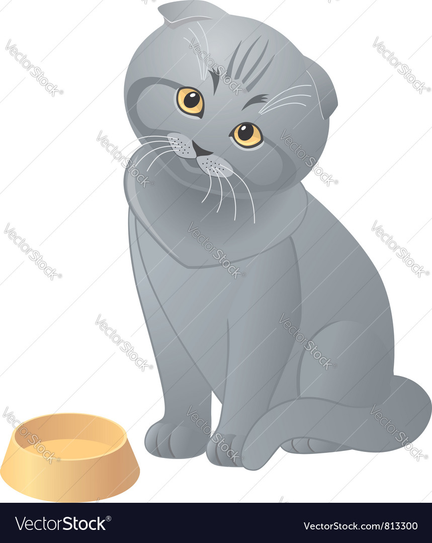 Hungry cute kitten vector