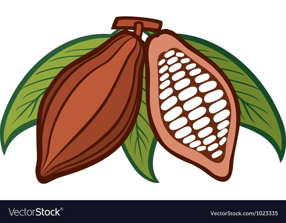 Cacao - cocoa beans vector