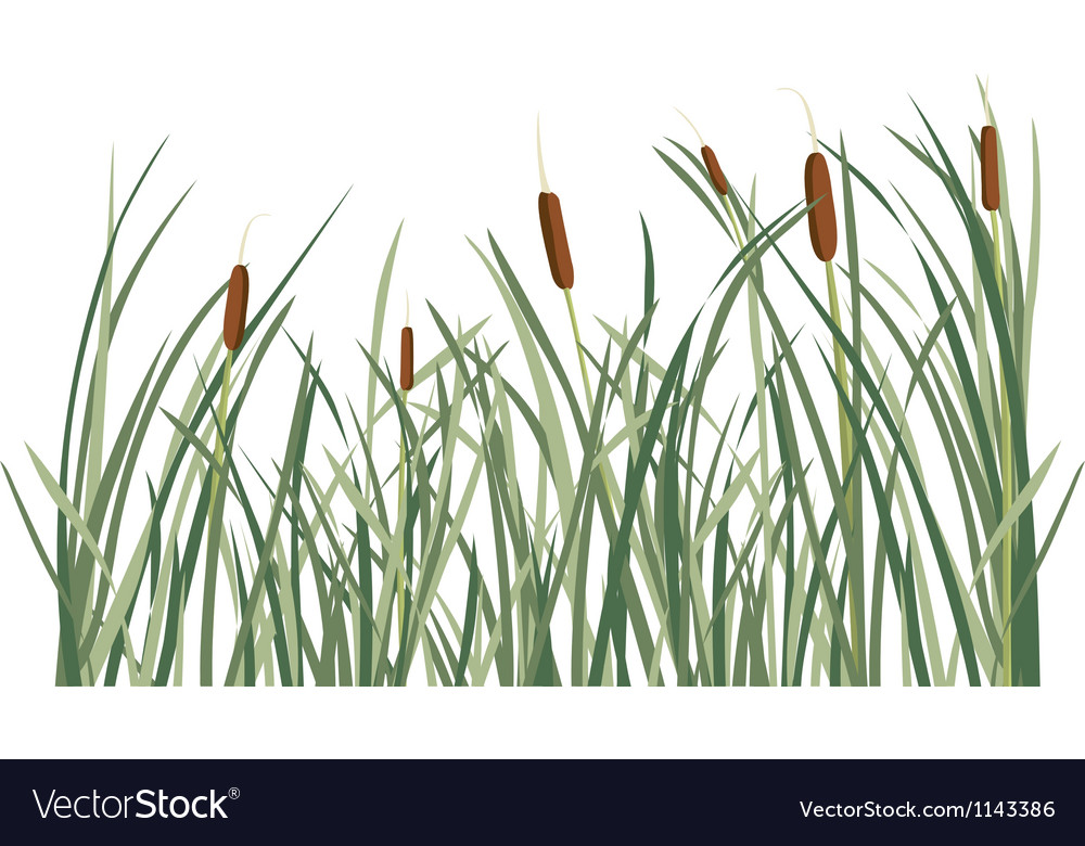 Reed and green grass background vector