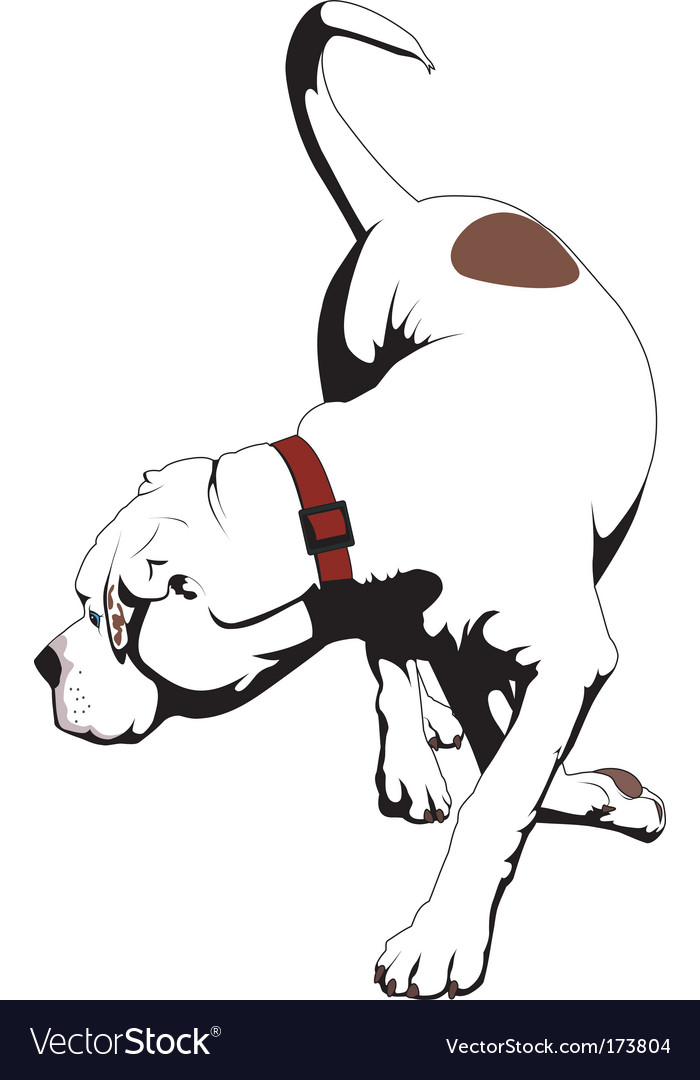 American bulldog vector - photo#18