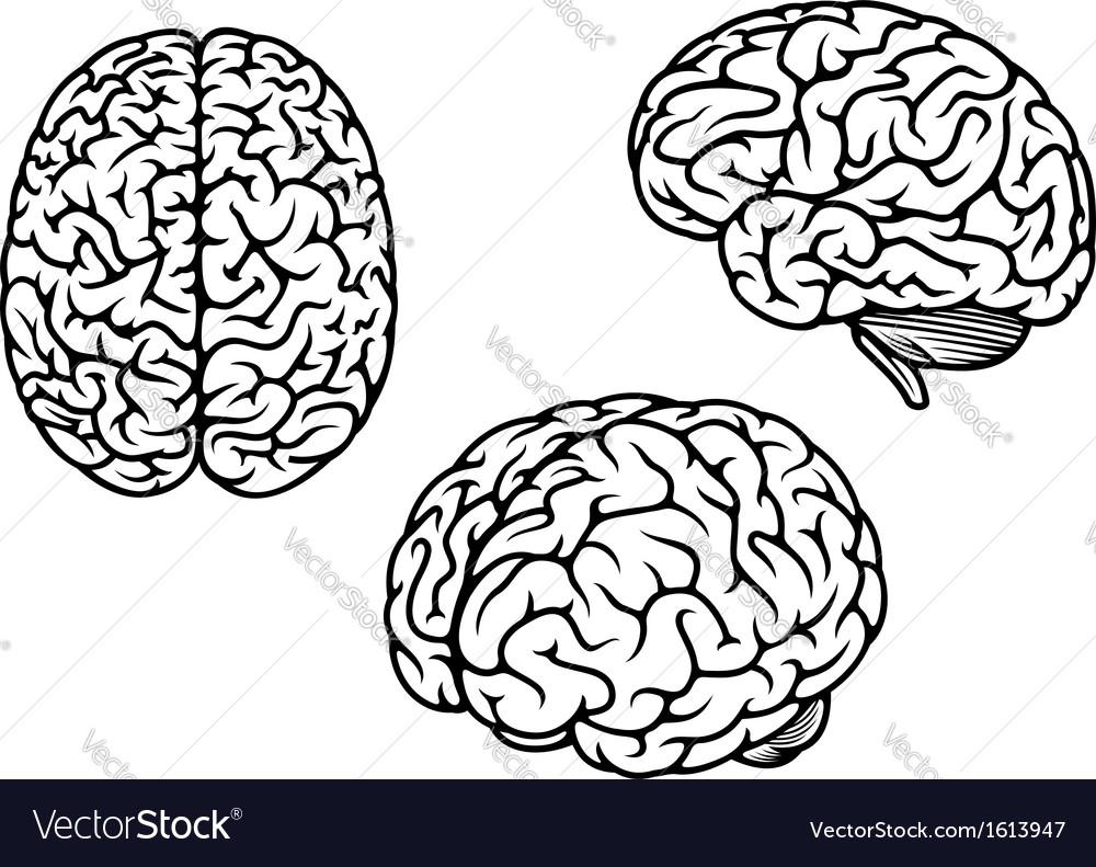 Human brain in three planes vector