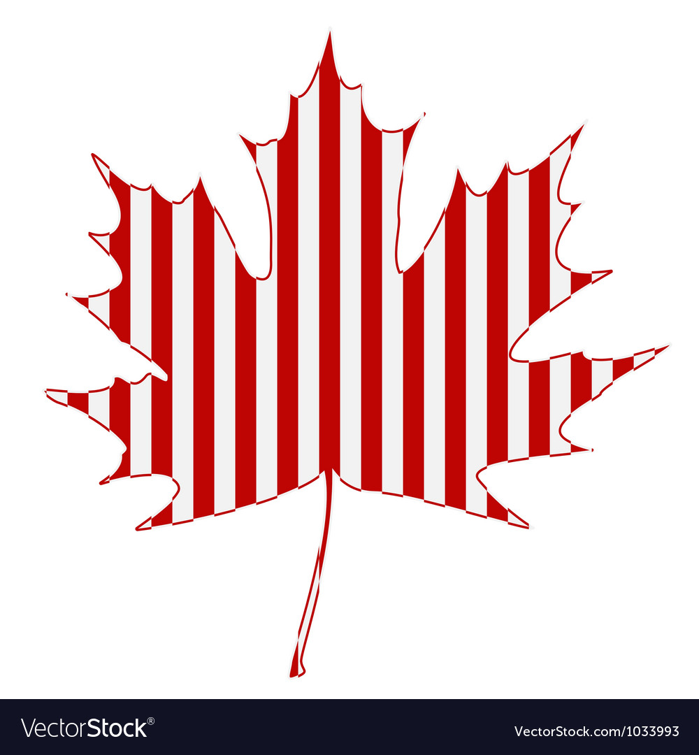 Striped maple leaf vector