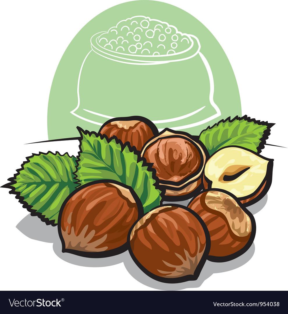 Hazelnuts vector