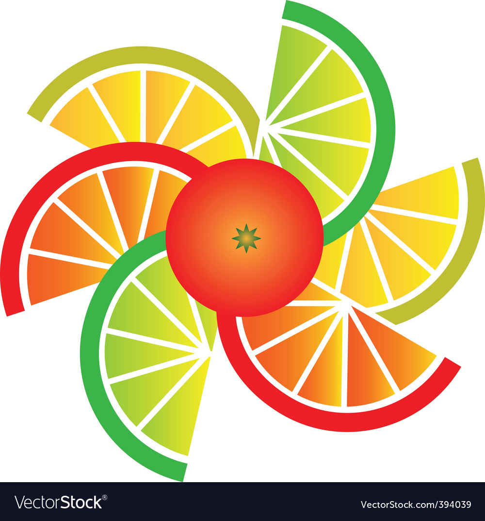 Citrus fruit slices vector by zoyalipets image 394039 vectorstock
