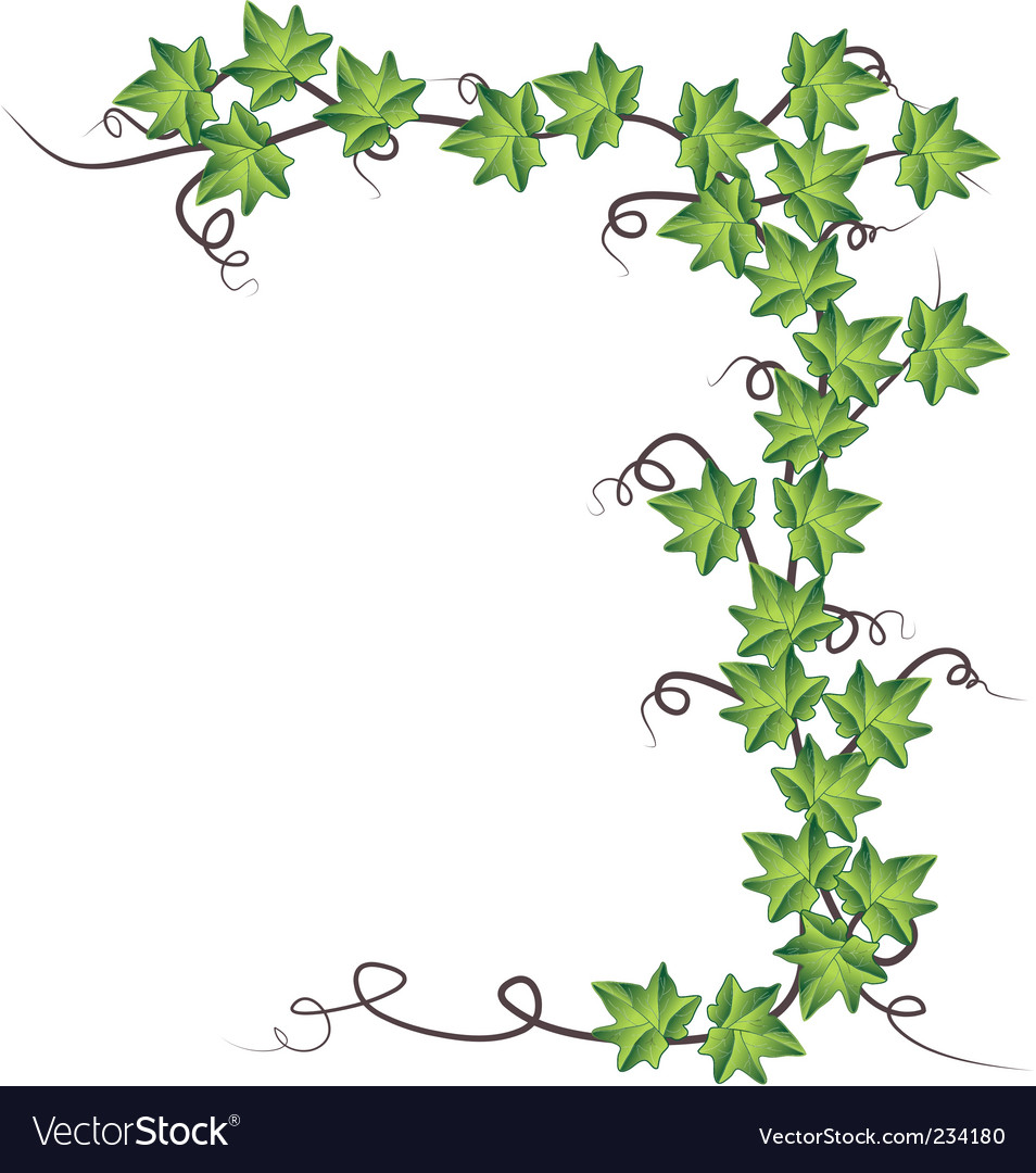 Ivy Vine Clip Art Images & Pictures - Becuo