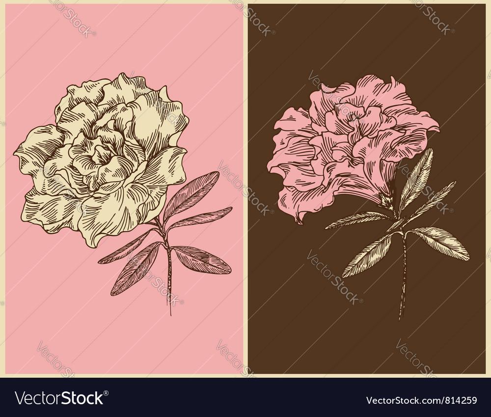 Azaleas - vintage floral design vector
