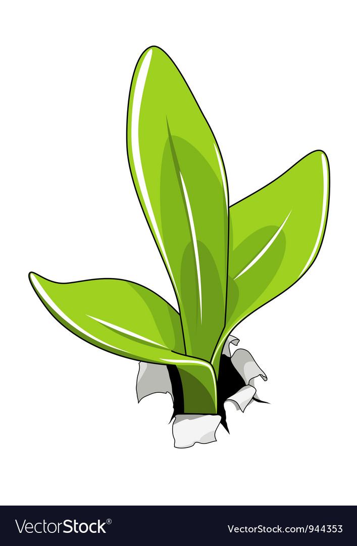 Young sprout vector
