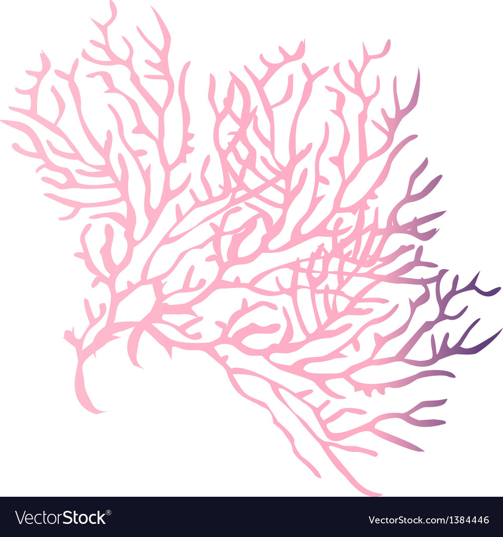 view of a coral reef vector by zzve - Image #1384446 - VectorStock