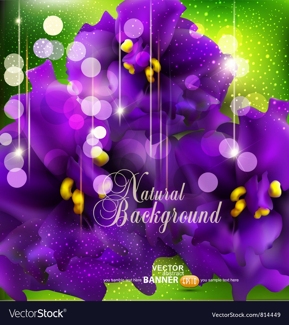 Background with romantic violets vector