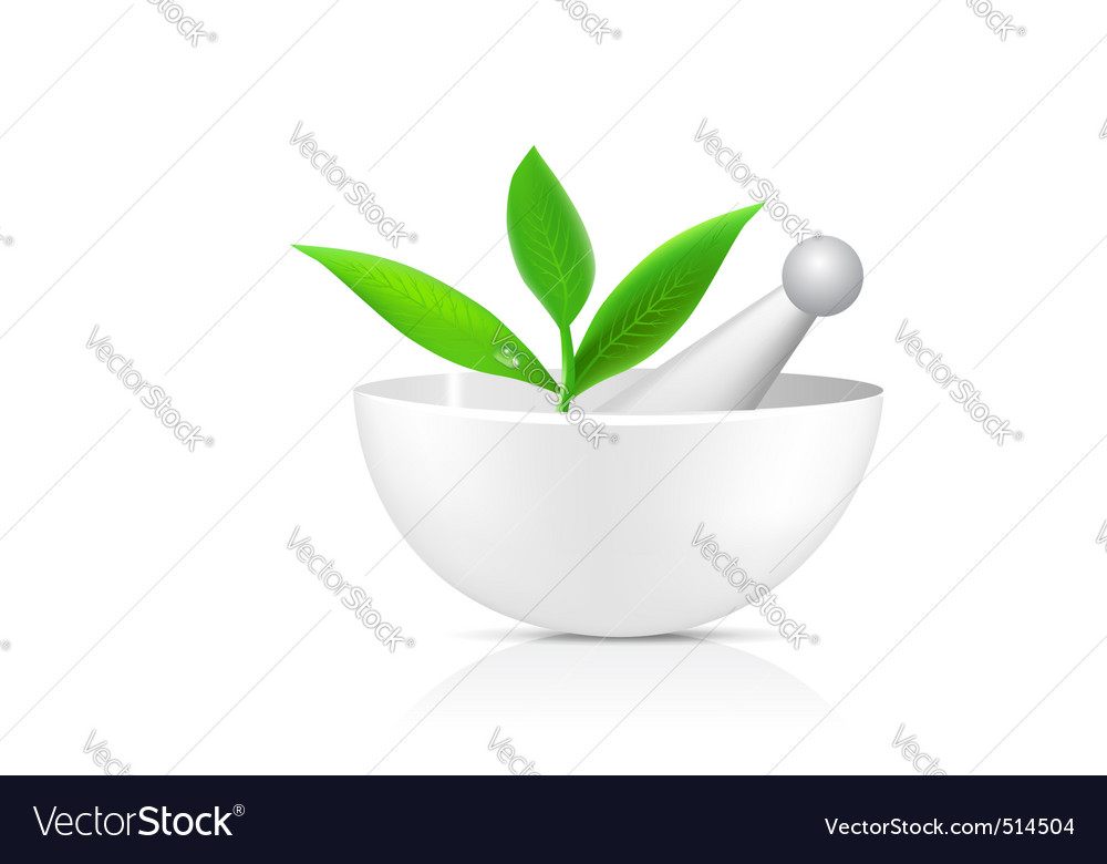 Mortar with herbs vector