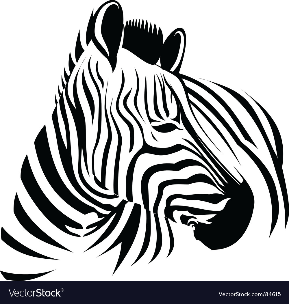 Wild zebra vector
