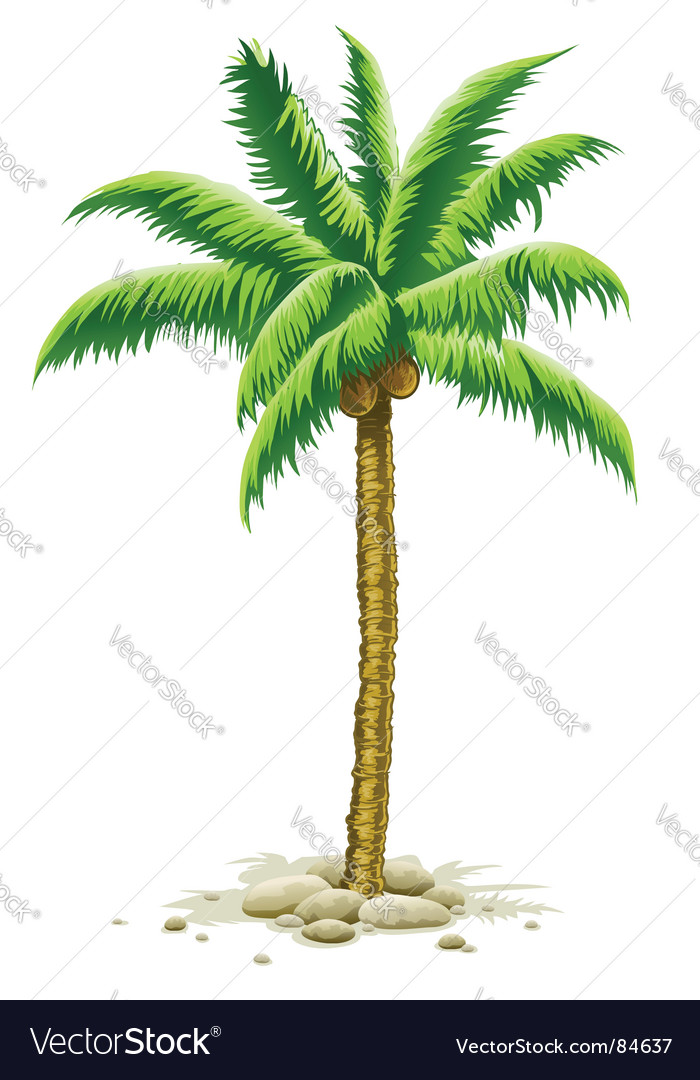 Cartoon Palm Trees With Coconuts Palm tree with coconut fruits