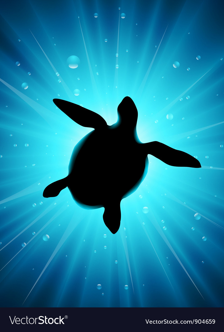 Turtle vector