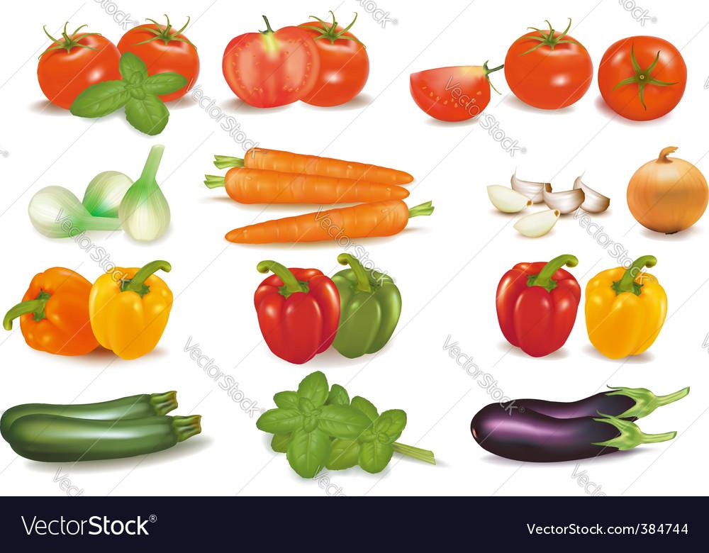 Vegetables vector
