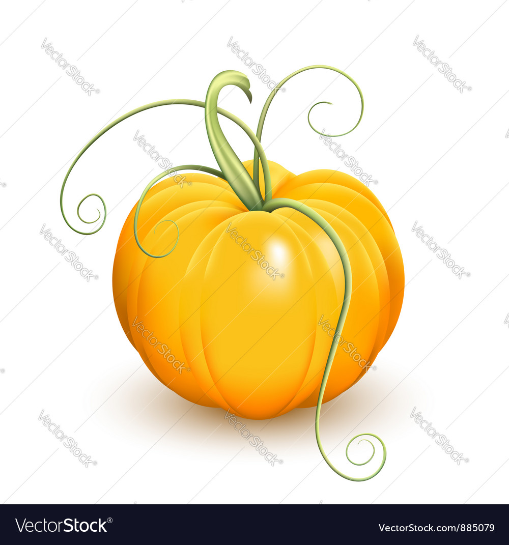 Pumpkin vector