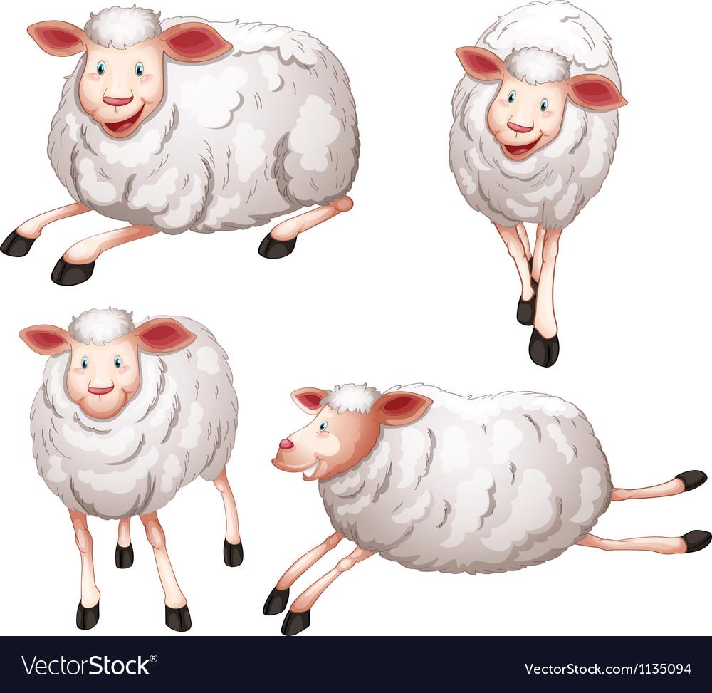 Sheeps vector