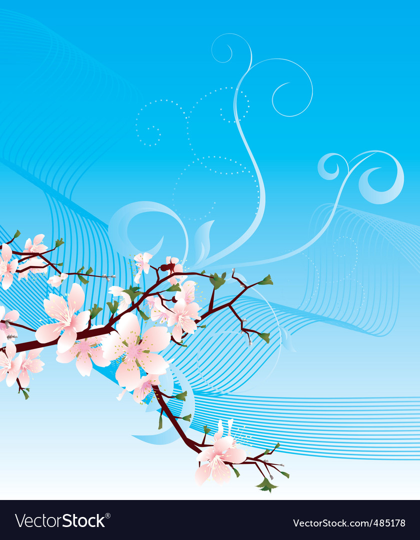 Blossoming cherry and blue sky vector