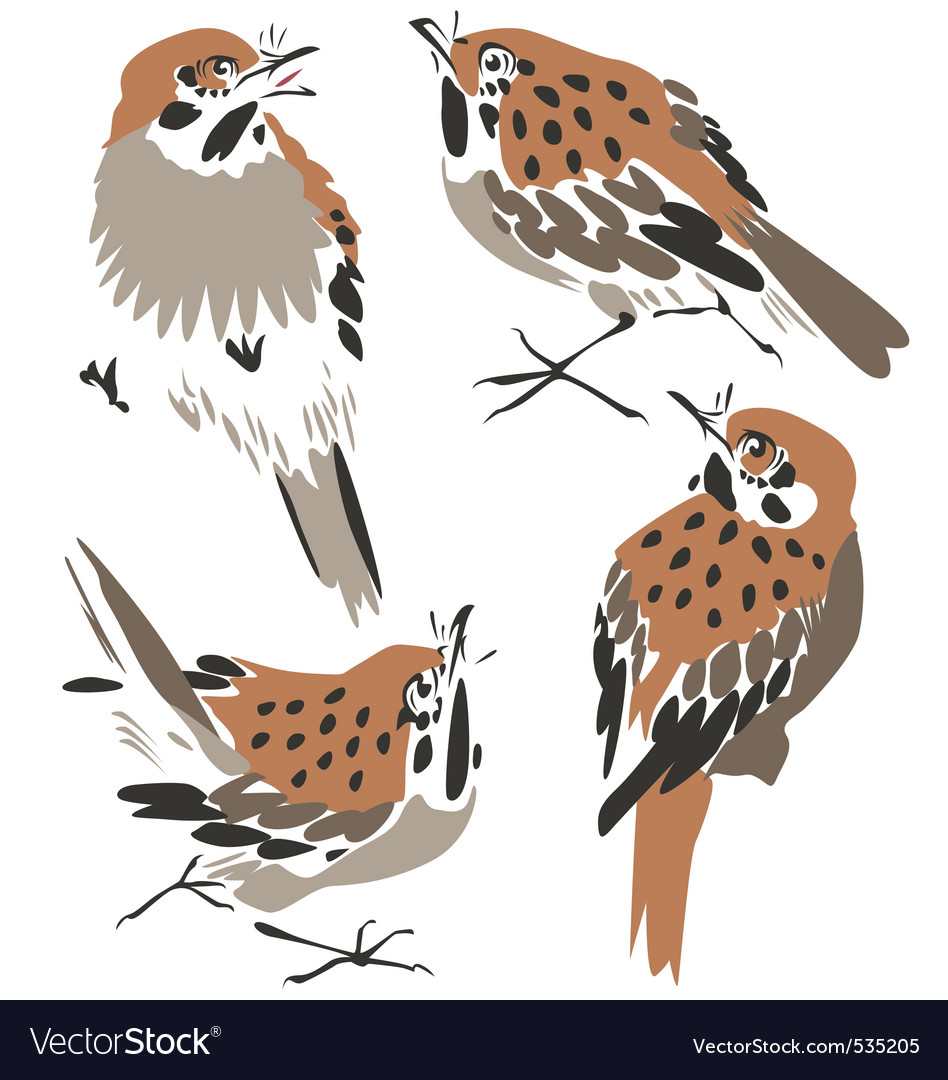 Sparrow or thrush vector