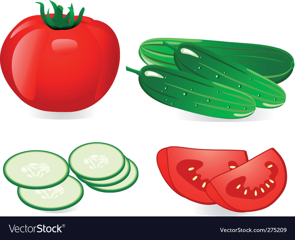 Cucumber and tomato vector
