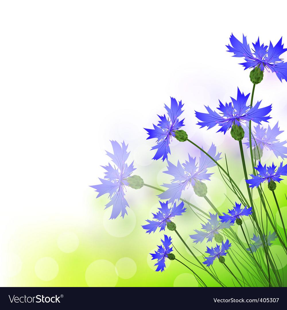 Cornflowers vector