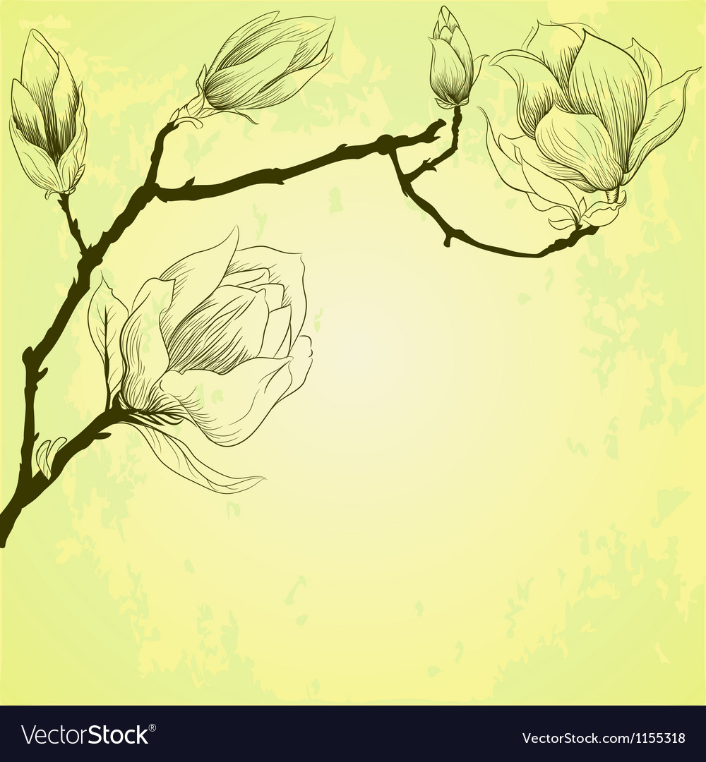 Spring background with magnolia flowers vector