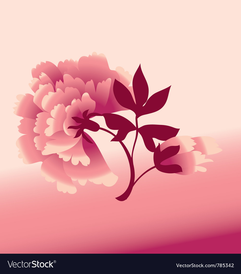Peon flower vector
