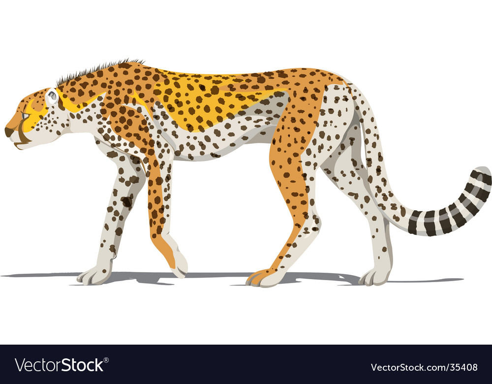 Running cheetah vector - photo#23