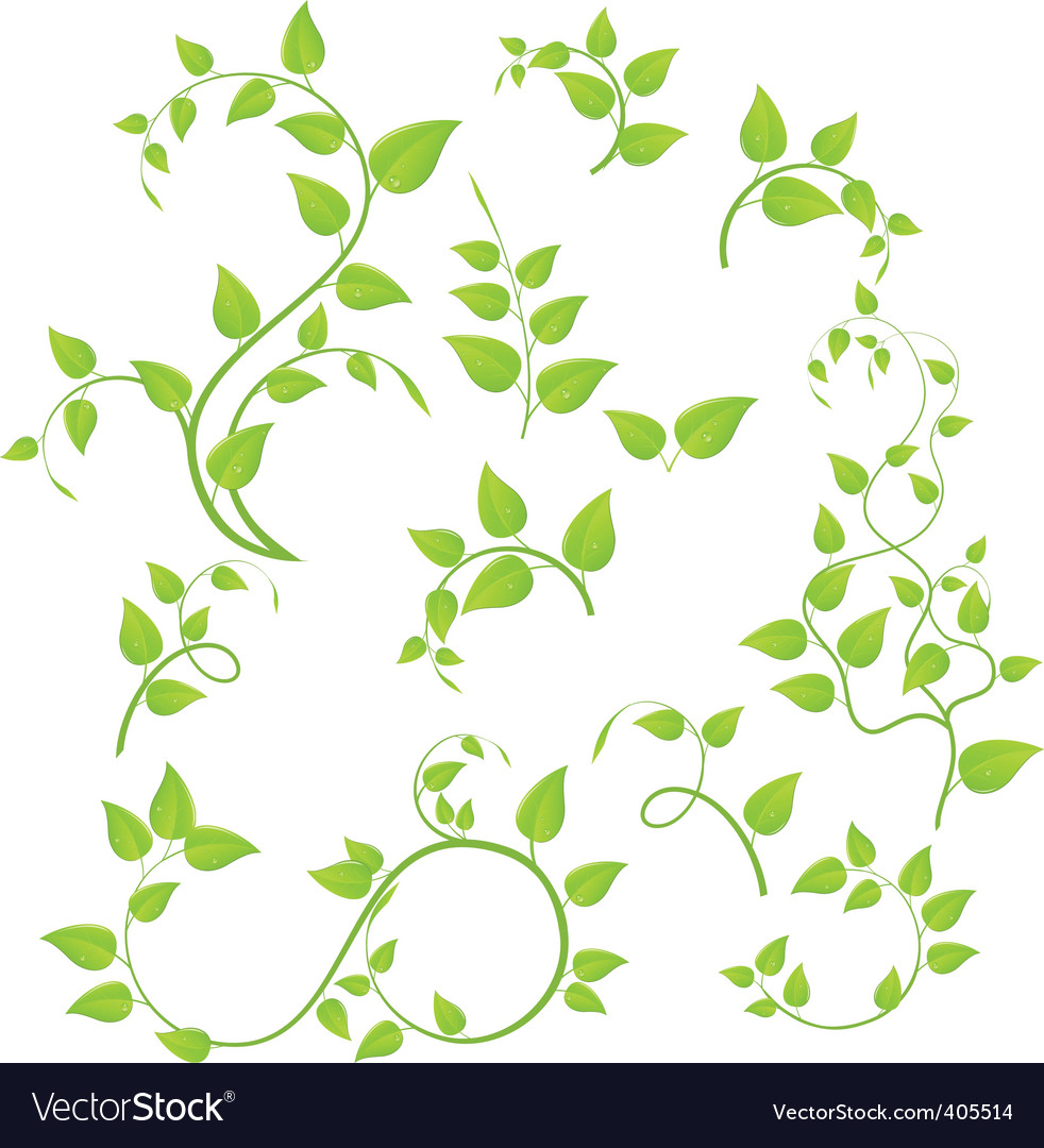 Green branches vector