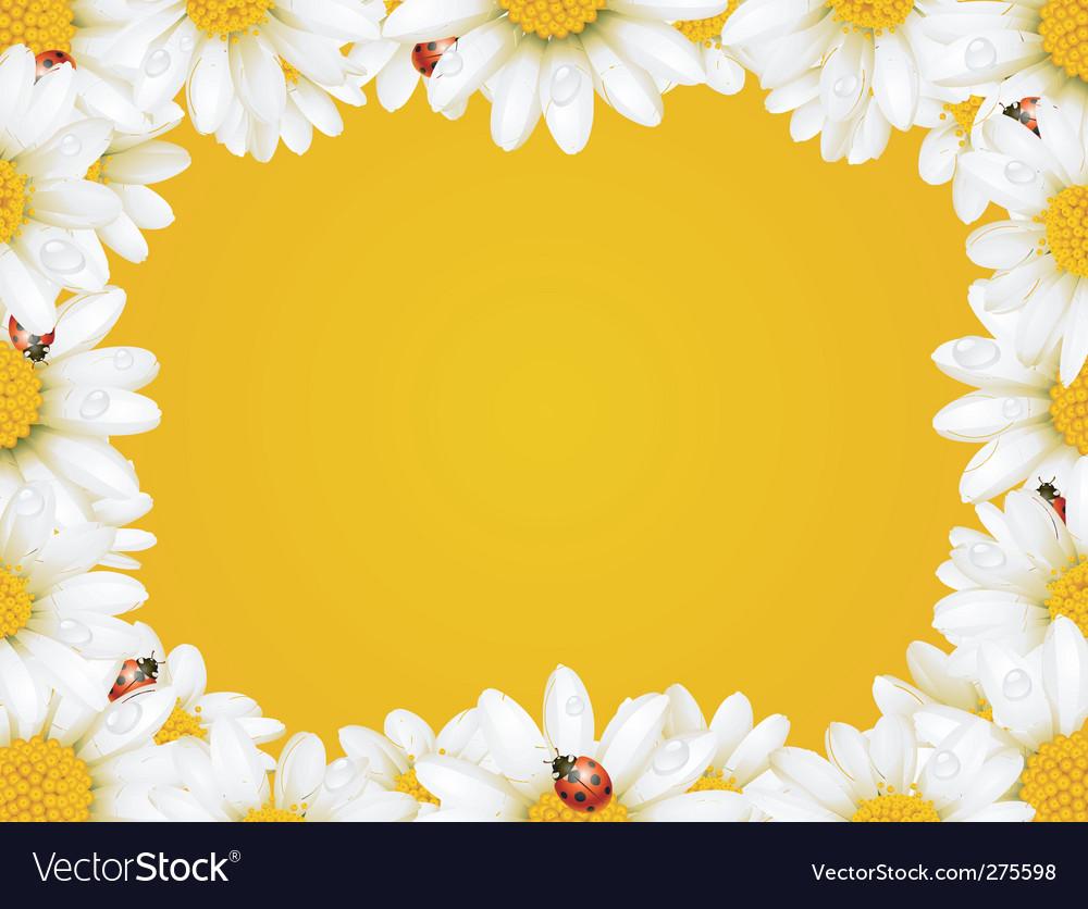 Chamomile frame vector