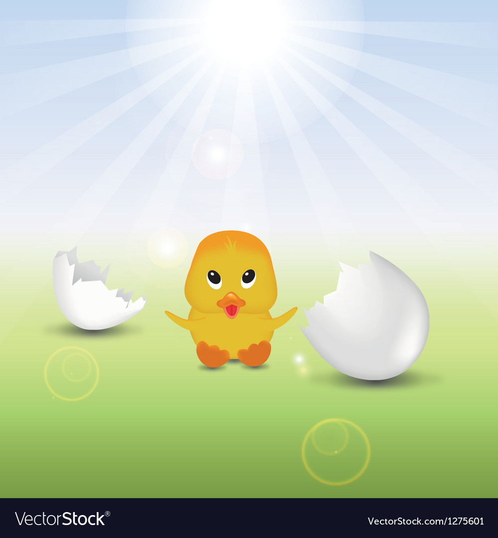 Cute chick with eggshells vector