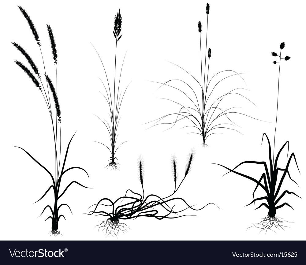 Grass Outline Vector grass outline vector Grass