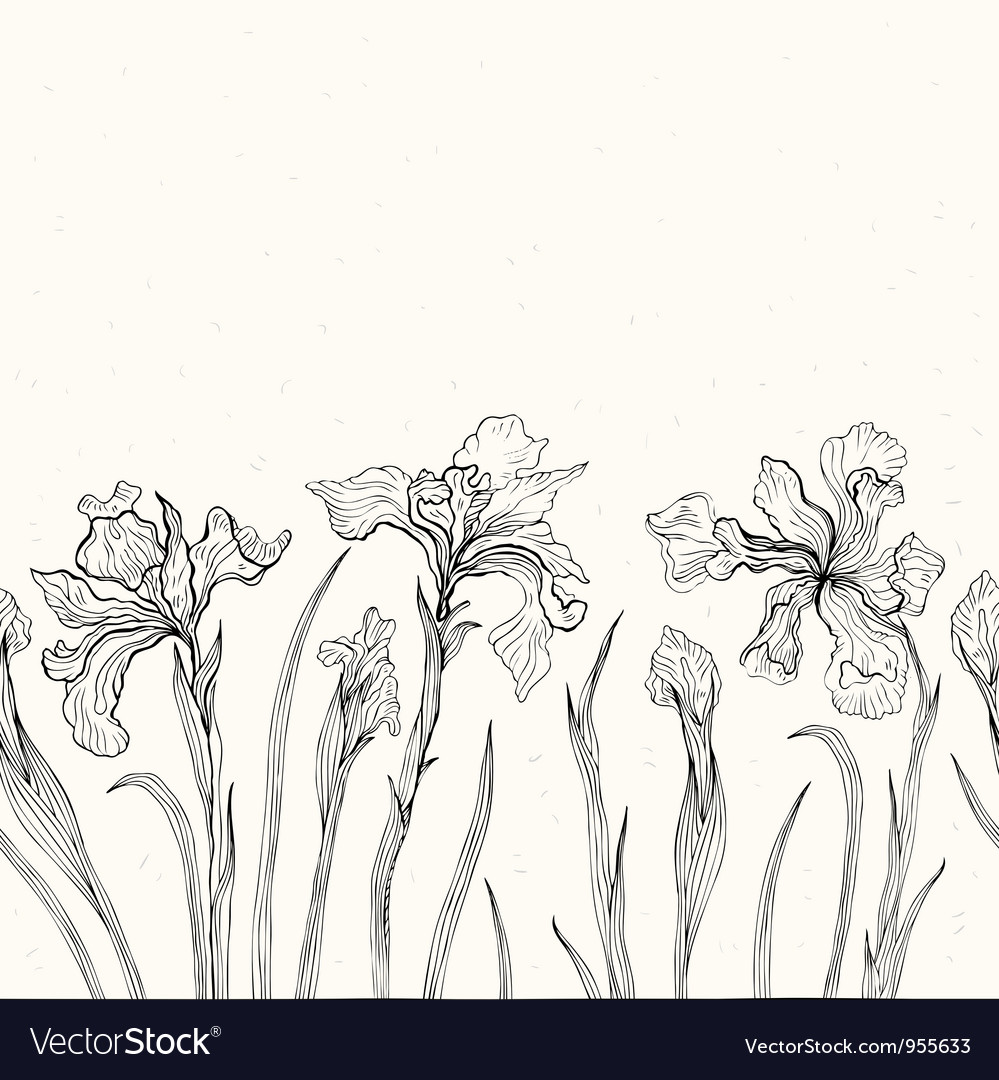 Abstract floral background iris vector