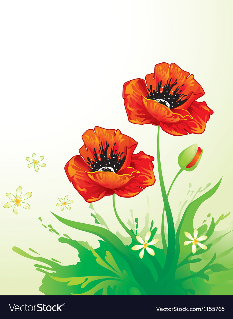 Natural background with poppy vector