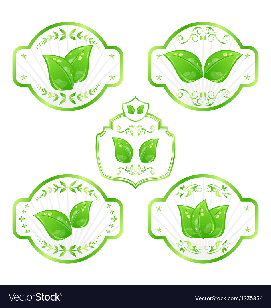 Set of green ecological labels with leaves vector
