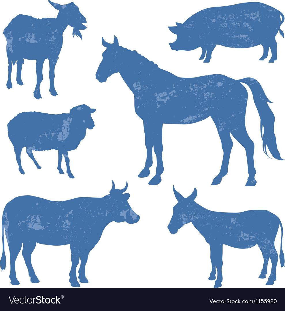 Livestock vector