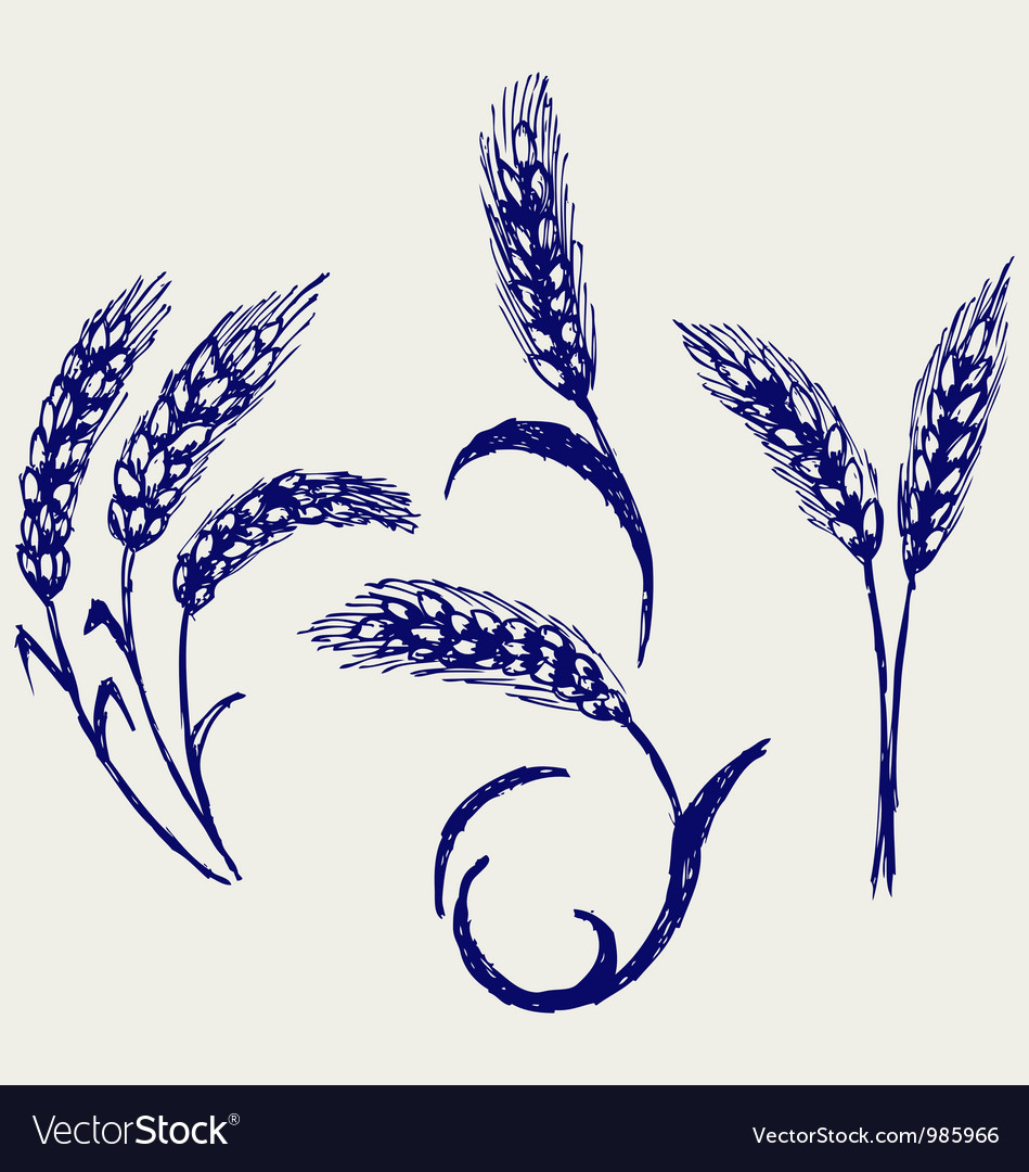 Wheat and rye vector