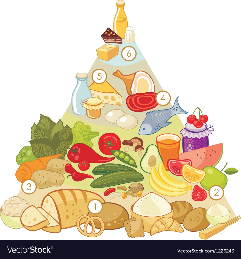 Omnivore food pyramid vector