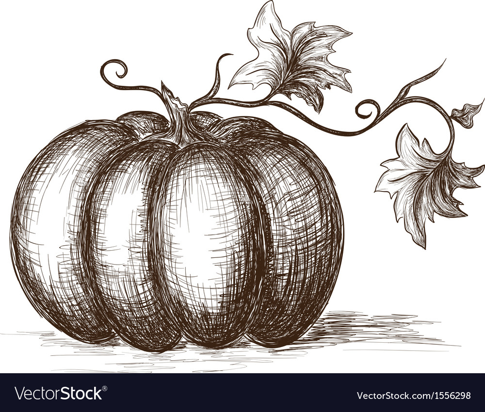 Hand drawn pumpkin vector