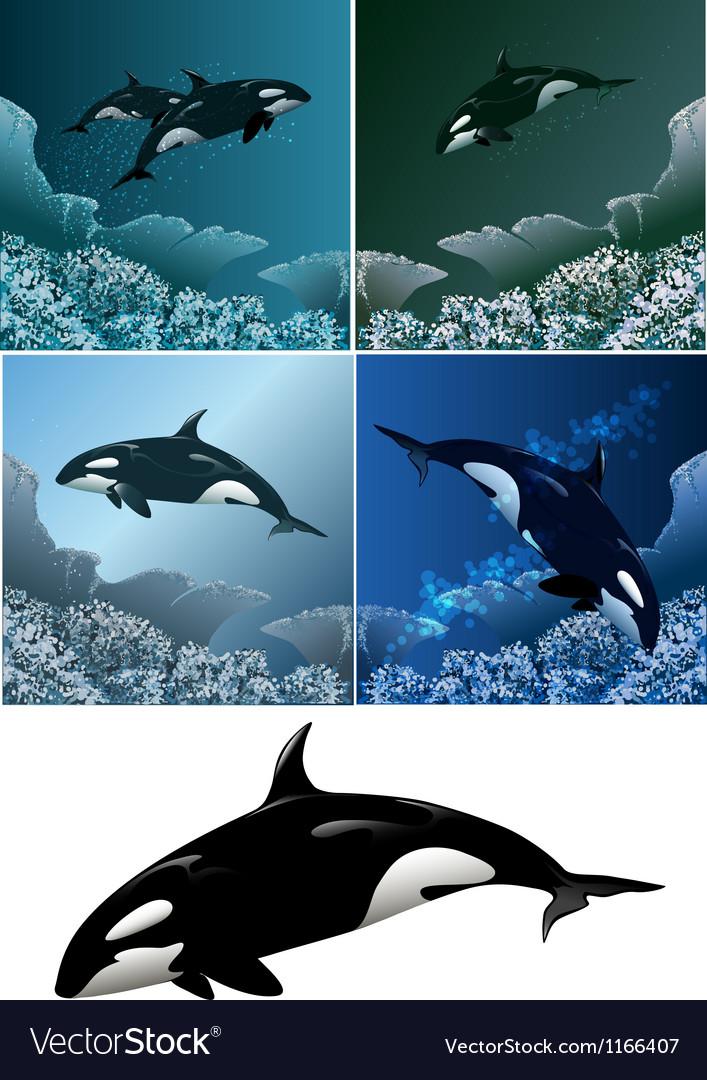 Killer whale set vector