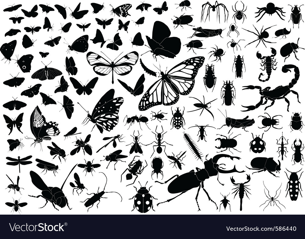 100 insects vector