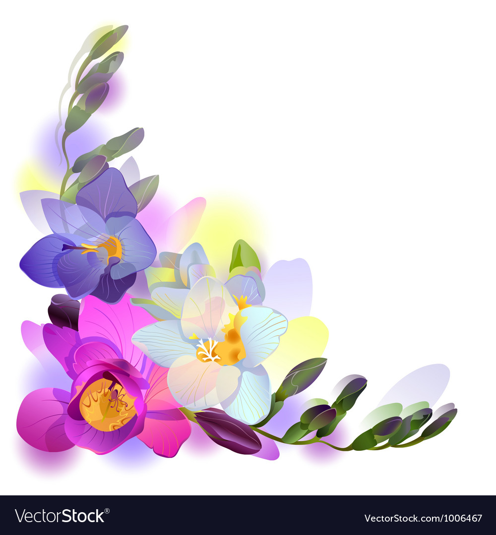 Greeting background with freesia flowers vector