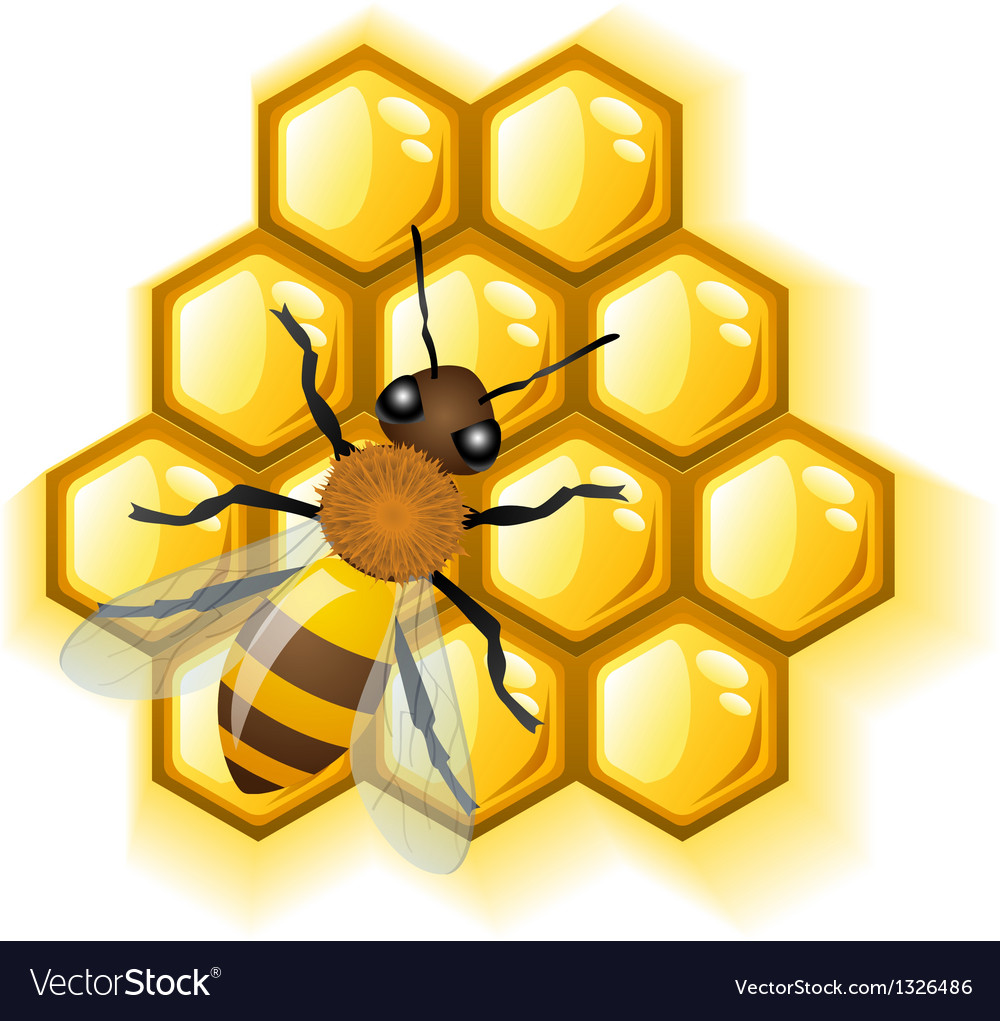 Bee with honey vector