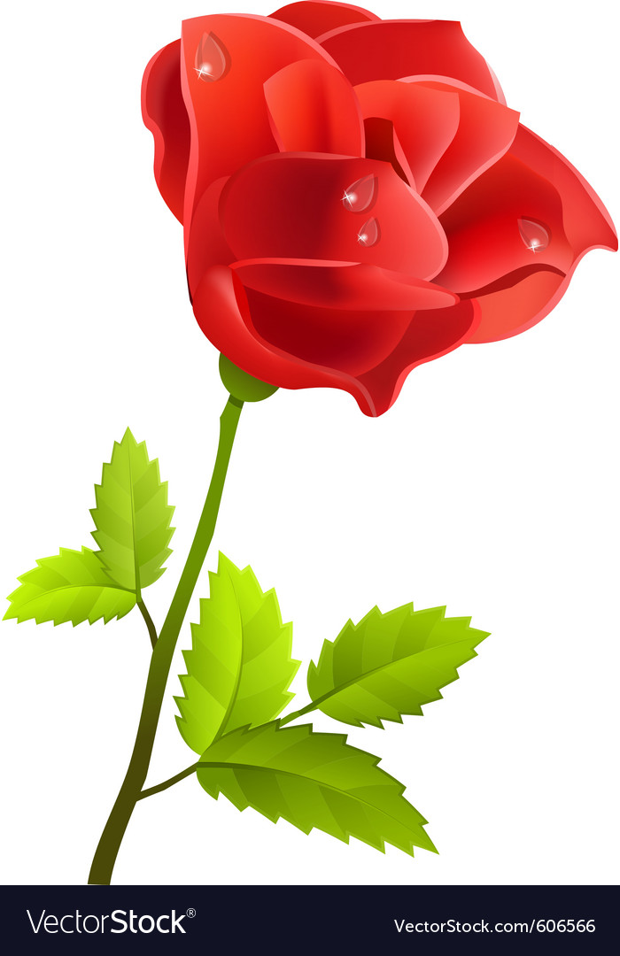 Red rose isolated vector