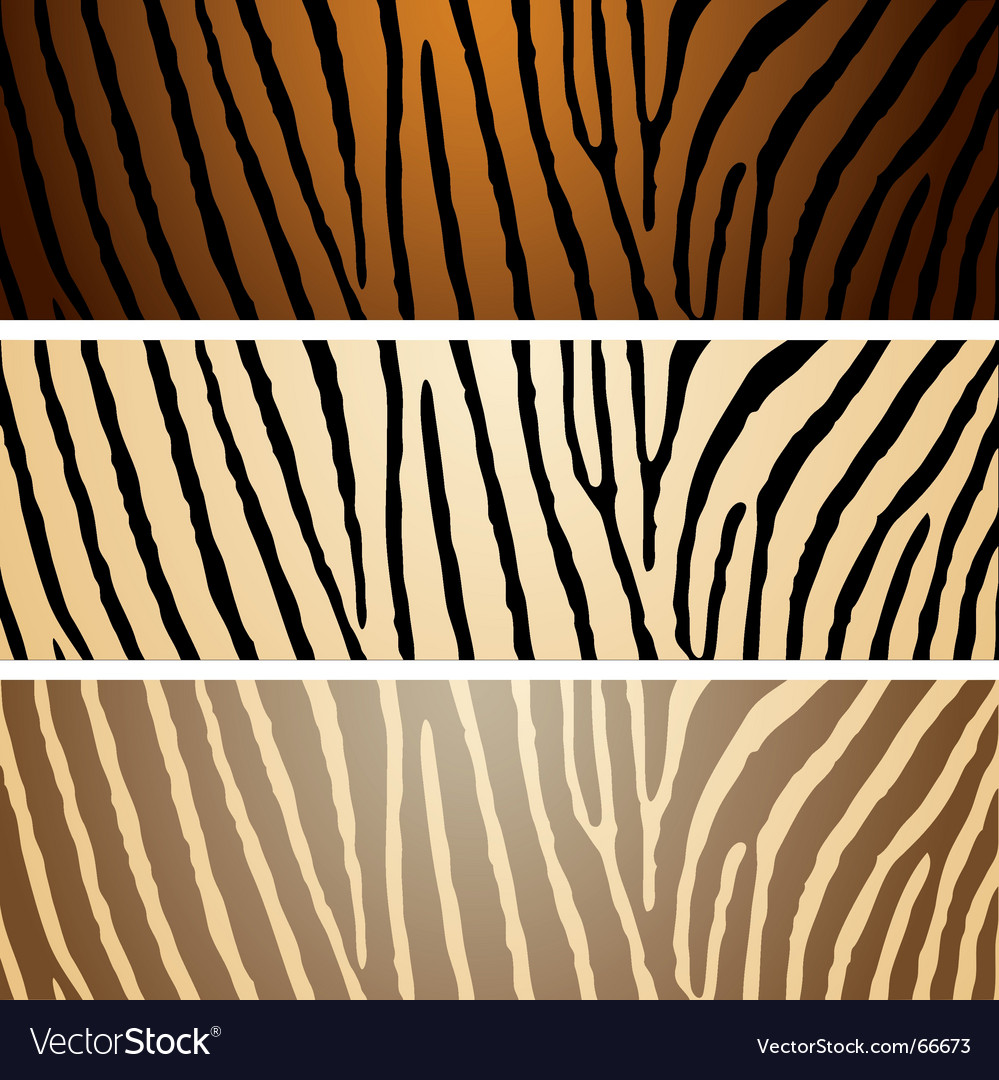 Zebra variation vector