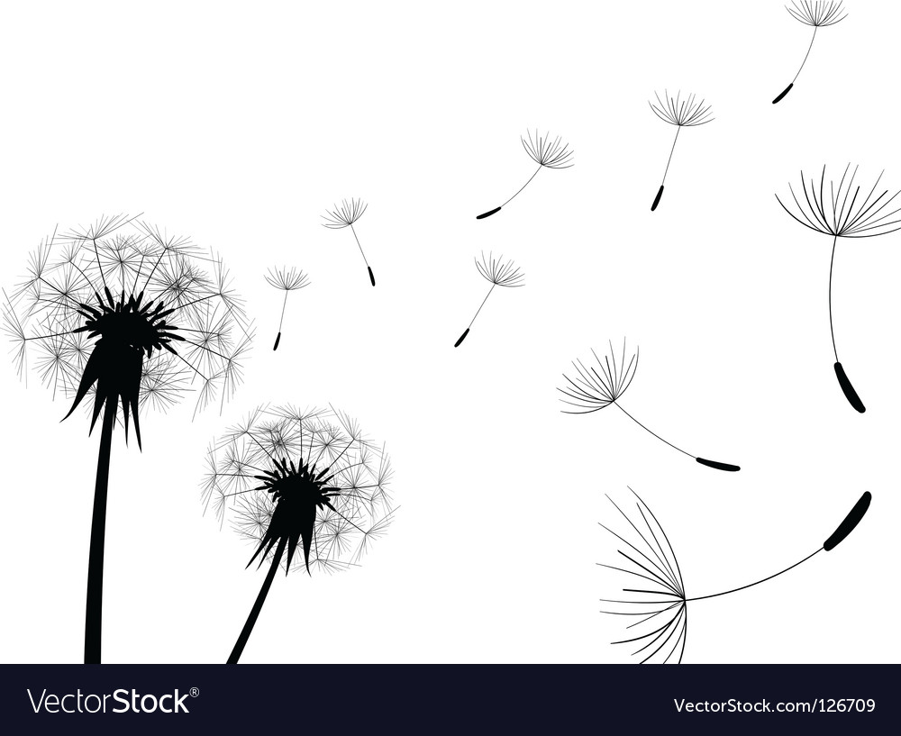 Dandelion vector by Greeek - Image #126709 - VectorStock